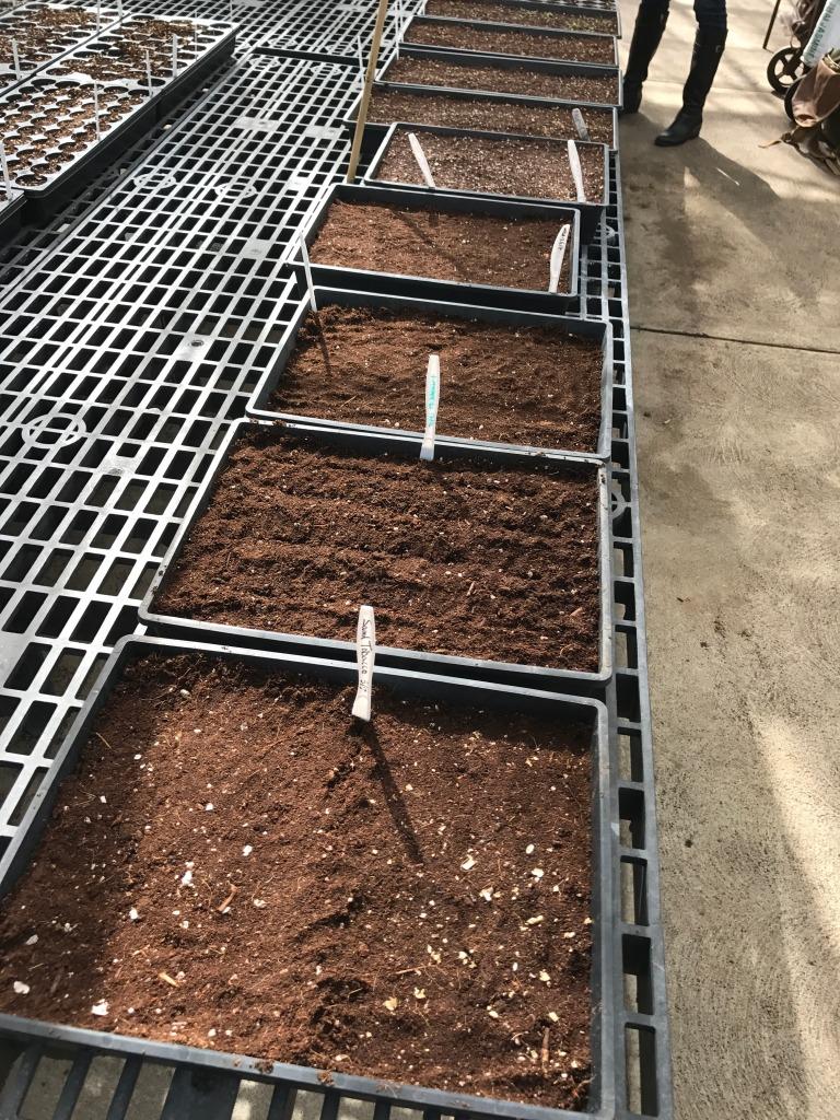 New Apothecary Garden Seeds